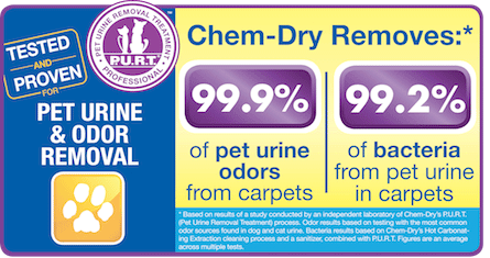 Chem-Dry removes 99% urine odor and bacteria