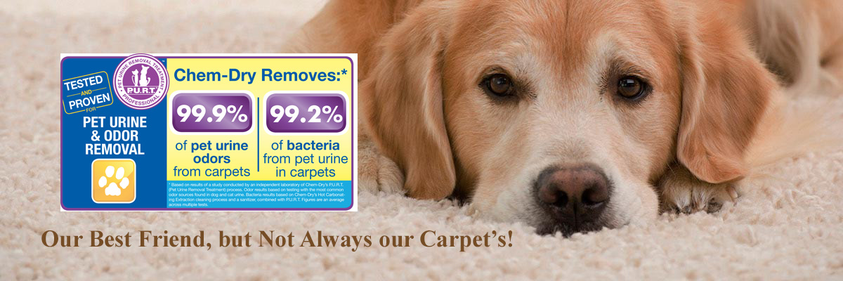 Pet Urine And Odor Removal South Bend Elkhart In Chem