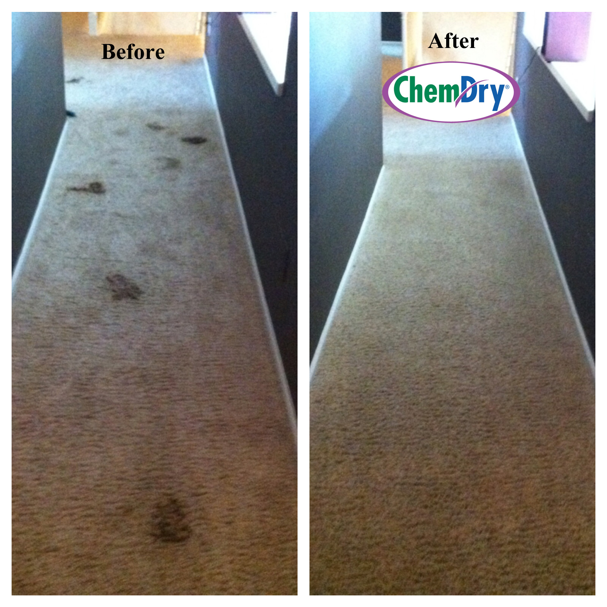 Chem-Dry Removes 98% Allergens & 89% Bacteria